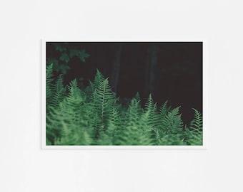 Large Fern Print // Large Wall Art // Wild Fern Wall Art Forest Landscape // Oversize Art - Fern Print Green & Black
