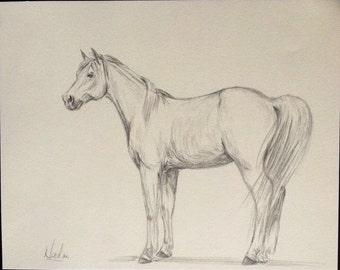 Orignial horse artwork graphite pencil sketch 8x10 arabian standing