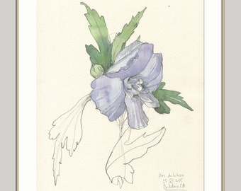 Hibiscus drawing 1 - ORIGINAL watercolour and pencil drawing of purple Hibiscus- Floral botanical art by Catalina