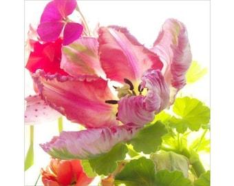 Tulip Photography , Parrot Tulip Art,  Flower Photography, Pink Chartreuse Wall Decor, Nursery Art, Bedroom Art