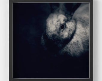 rabbit print, bunny print, printable wall art, digital download, square wall art print, black and white rabbit poster, animal wall art print