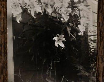 Original Vintage Photograph | Daffodil Dream | 1948