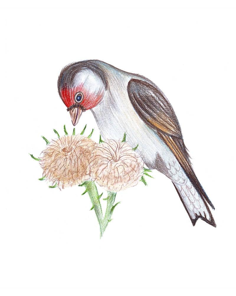 Rama pájaro pintado. Lápices de color dibujo arte aves