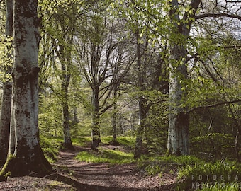 SHADE photography print,  Scotland woodland landscape, 8x12