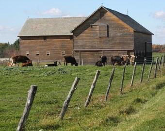 Happy Cows (digital download)