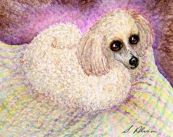Apricot poodle comfy 8x10 print