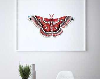 Hyalophora gloveri, silkmoth, moth art, moth print, moth painting, butterfly art, butterfly print, watercolor moth, watercolor butterfly