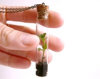Vial necklace terrarium plant ( green, nature, living, ecosystem, forest, woodland ) 64