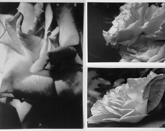 SALE! 2 black and white rose photo prints, wall art (HQ), you choose