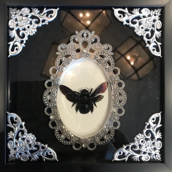 Black carpenter bee taxidermy display!