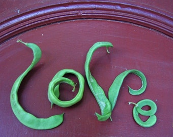 LOVE greeting card~ spelled out with curvy Romano beans Blank inside