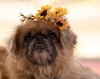 Pet accessories dog Flower crown yellow puppy collar bridal wedding hair wreath engagement photo prop puppy halo accessories