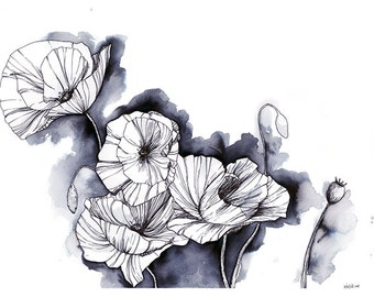 Papaveraceae, Pen and Ink Illustration of Poppies