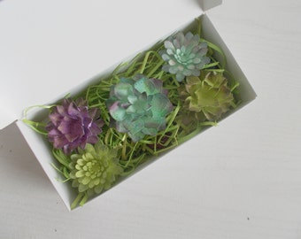 Seeded Paper Succulent  and Seed Bomb Sample Set - Unique Gardening Gift - Eco Friendly Gardener Kit - Naturalist Kit!