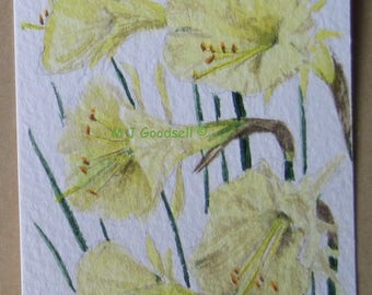 Narcissus romieuxii - ACEO original watercolour painting