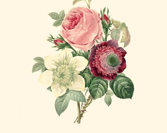 Vintage Flower Bouquet of Rose, Anemone and Clematide Print 8x10 P204