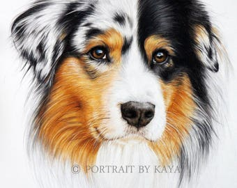 Custom Pet Dog gift, AUSSIE, Australian Shepherd , Custom pet drawing, animal portrait, pet portrait , dog portraits, personalized pet