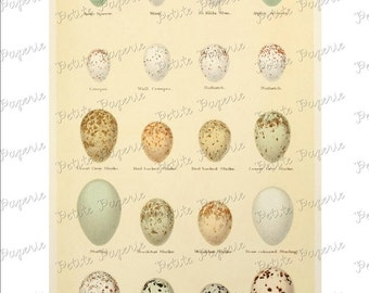 Bird Egg Digital Download Collage Sheet E