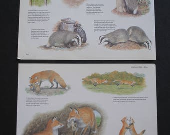10 Vintage Nature Mammals Book Pages, Paper Ephemera Scrap Pack, Upcycled for Scrapbooking, Junk Journals, Smash books, Paper Crafts