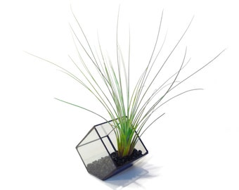 Stained Glass Terrarium - 10cm Cube - Cut-off Edge - Geometric Terrarium - Geometric Planter - Desktop Planter