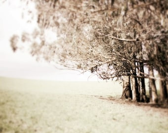 "Landscape photograph neutral nature wall art California eucalyptus trees in meadow pale brown decor ""Eucalyptus Grove"""