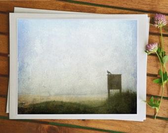 Bird photography, raven photo, nature photography, fine art prints, photo painting, 5x7 photo, home decor