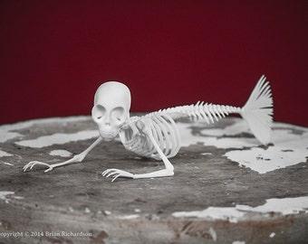 Fiji Mermaid Skeleton 3D Print Taxidermy