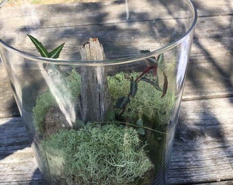 Terrarium kit with all you need  complete instructions included,