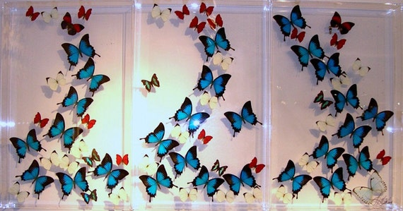 Atlantis - Three Panel Mural  wall hanging display made with real butterflies