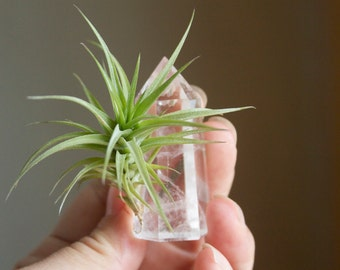 Air Plant With Crystal, Small Size, Treat Yourself, Boho Decor, Crystal Planter, Little Something, Gift For Friend