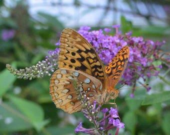 Belle Tiger Moth alimentation sur papillon fleurs Art mur maison bureau Business art plein de couleur
