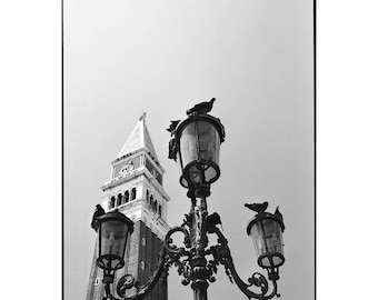 Pigeons, Saint Marks Square, Venice, Signed Art Print / Black and White Photography / Venice City Photo