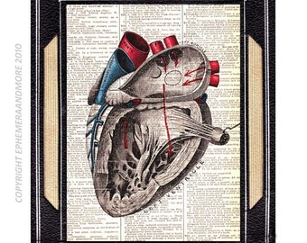 ANATOMICAL HEART art print wall decor vintage illustration human anatomy medical science cardiologist gift on dictionary book page 8x10, 5x7