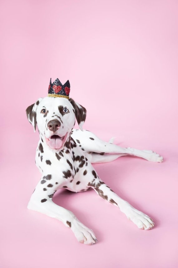 Dog Costume    King of Hearts Crown    Dog Hat    Crown Headband    Dog Clothes    Add Any Number