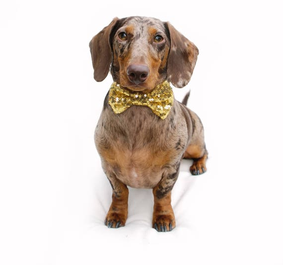 Bowtie For Dog     Cat Neck Tie    Bowtie for Kitty    Pet Bow Tie    Cat Costume