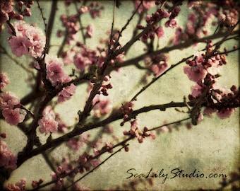 Cherry Blossoms : flower tree vintage antique japan japanese sakura pink white spring beauty love home decor 8x10 11x14 16x20 20x24 24x30