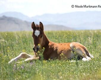 Wild Horse~ Pferd ~ Animal ~ Wall Decor~ Utah