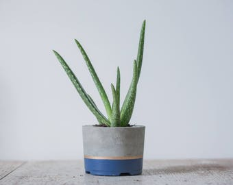Large Concrete Planter, Navy & Gold