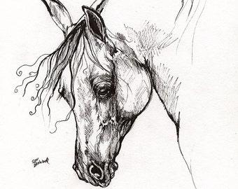 Ostragon-polnische Vollblutaraber, equine Kunst, Pferdesport, Arabisches Pferd, original Federzeichnung