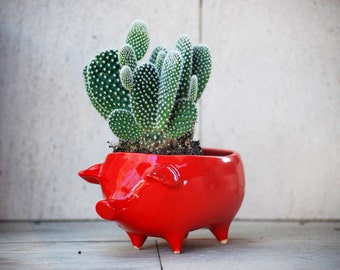Ceramic pig succulent planter, Pottery pig Planter, Pig cactus planter, Red pig pot, Handmade pottery, office gift, Housewarming gift
