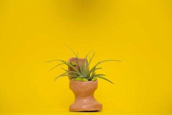 TOILET PLANTER / mauve - lime green