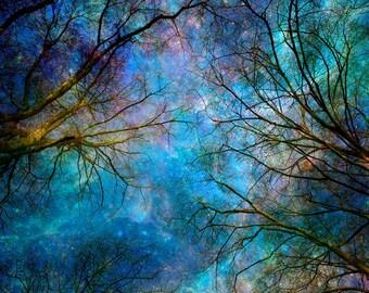 Nature photography, Winter trees, Stars, Night, Sky, Blue,Sapphire, Nature, Wall art, Home decor.