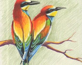 Oiseaux colorés, dessin au crayon de couleur