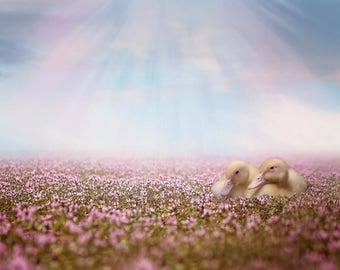 Goslings in Heather Field, premade Backdrop, young Goose Backdrop, Flower Field, Composite, Fantasy Backdrop, Photo edit, Children Backdrop