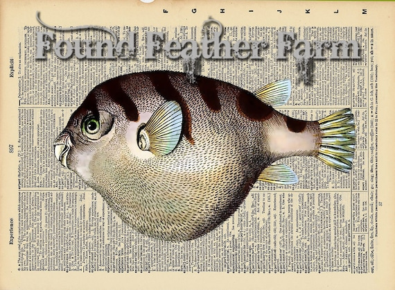 """Vintage Antique Dictionary Page with Antique Print """"Puffer Fish Left Facing"""""""