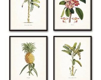 Vintage Tropical Botanical Print Set No. 1, Giclee Prints, Pineapple, Art, Beach Decor, Coastal Art, Botanical Print Set, Poster, Palm Trees