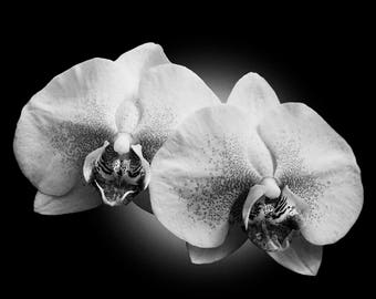 Black and white orchids, orchid print, orchid, flower print, orchid art, orchid photo, orchid wall art, orchid photography, white orchid