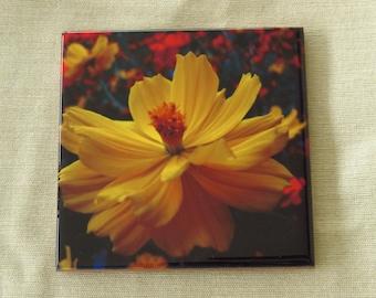 4x4 Ceramic Coaster Yellow Orange Cosmos