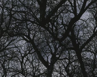 Timeless Treasures - Dark Tree Branches - C3760 - Halloween - Tree - Fall - Branches - Winter - One More Yard
