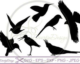 SALE SVG Birds in vector, SVG cut files, svg files Birds, scrapbook supplies, Vector Files, Clip Art, svg files, Dxf files